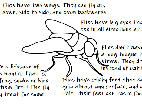 The FLY - Reading Comprehension Worksheet