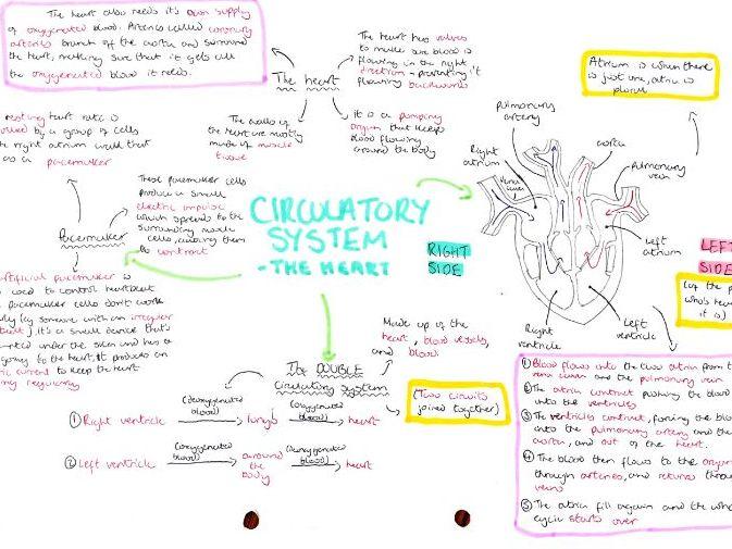 GCSE Biology revision resources