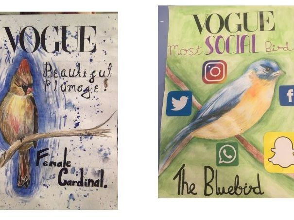 Bird art project to design a poster or magazine cover