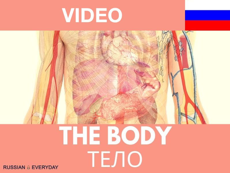 Russian Words-The Body: VIDEO and eBOOK