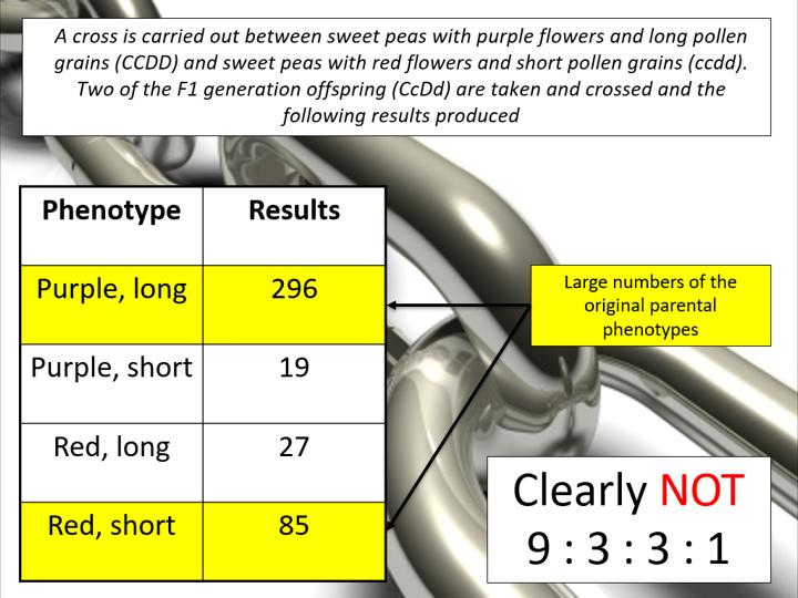 Autosomal Linkage (OCR A-level Biology)