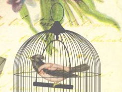 GCSE 9-1 Exam Practice based on an extract from 'I Know Why the Caged Bird Sings'.
