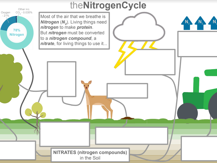 Nitrogen Cycle Poster Task + Questions