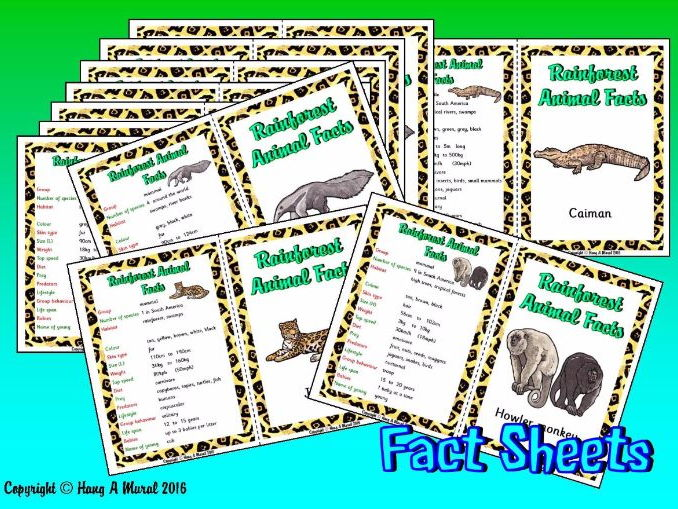 The Rainforest - Animals Fact Sheets