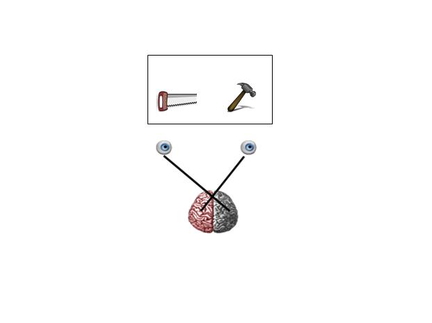 Biopsychology-Lesson Split-brain research