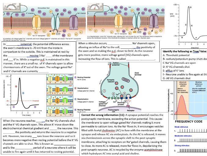 Ch13 Neuronal communication OCR A,  A level Biology