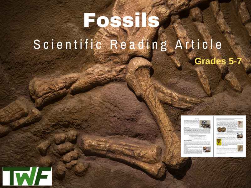 Fossils Science Reading