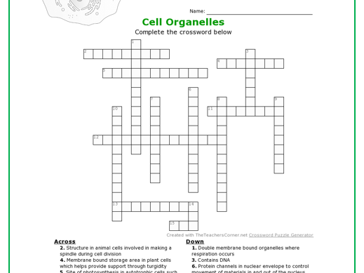 Cell Structure and Function Activities