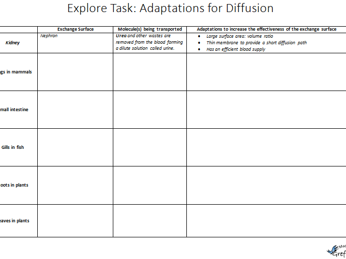 Explore Task: Adaptations for Diffusion