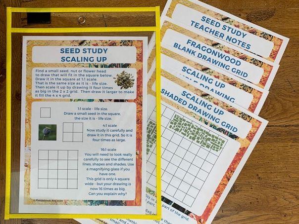 Fragonwood Seed Study Outdoor maths activities KS2