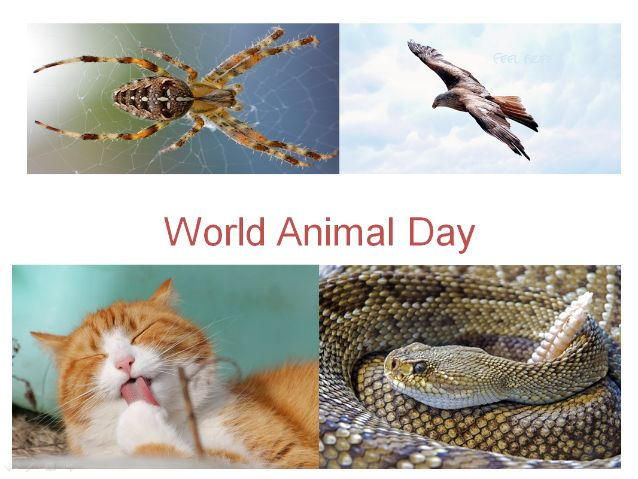 World Animal Day PowerPoint Presentation + 31 Different Ways To Use This Teaching Resource