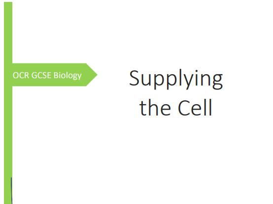 OCR GCSE Biology Supplying the Cell