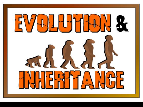Image result for evolution and inheritance ks2