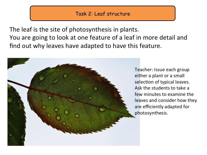 gcse biology coursework photosynthesis Igcse revision notes photosynthesis ks4 biology science notes on photosynthesis gcse biology guide notes on photosynthesis.