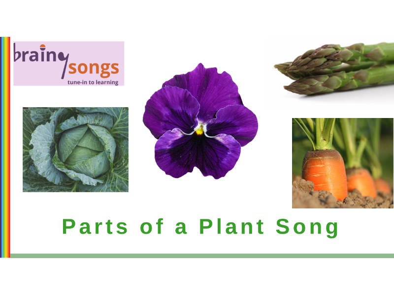 PARTS AND FUNCTIONS OF A PLANT for Year 1
