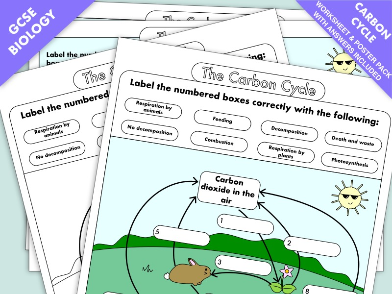 GCSE Biology: Carbon Cycle worksheets and A3 wall posters UPDATED