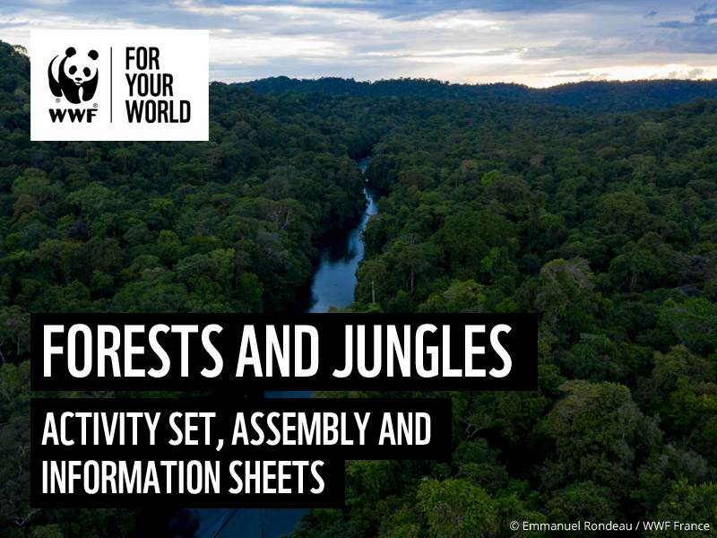 Our Planet: Forests and Jungles - KS2 & KS3 Activity Set
