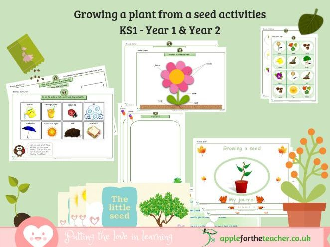 Growing a seed science topic bundle KS1 EYFS