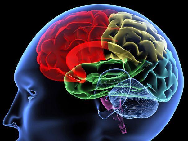 The Brain Edexcel B