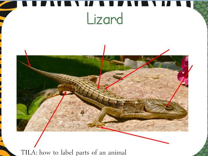 Animals lesson pack- structure of animals, label parts, classifying, herbivore/carnivore, diet etc.