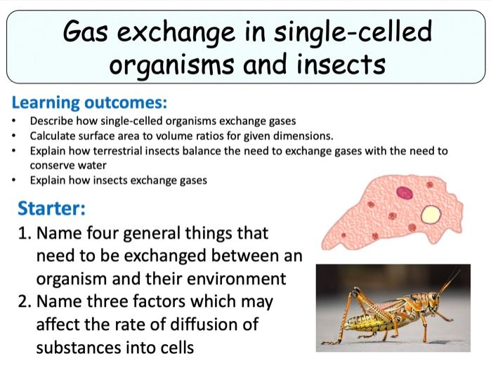 NEW (2016) AQA AS Biology – Gas Exchange in Single-Celled Organisms and Insects