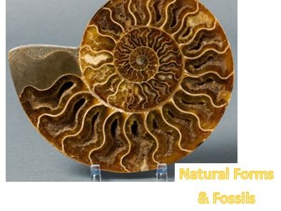"Natural Forms Art ""Fossils"" Worksheet"