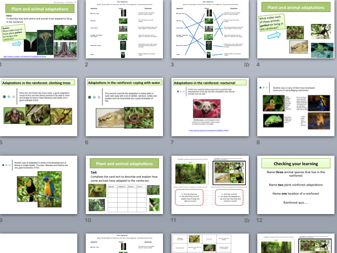 Rainforest plant & animal adaptations (AQA The Living World)