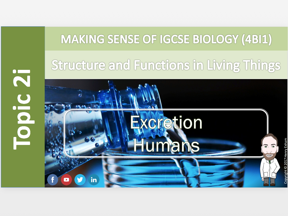 IGCSE Biology 9-1 - 2i Excretion - Humans