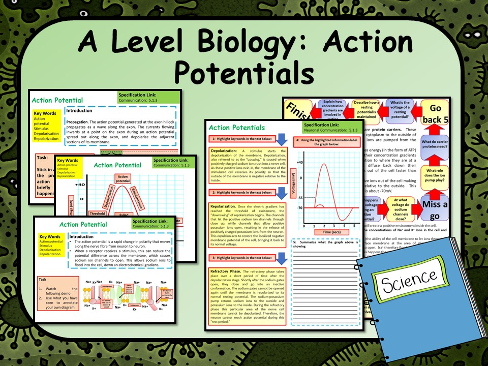 A Level Biology Action Potential Lesson & Activities