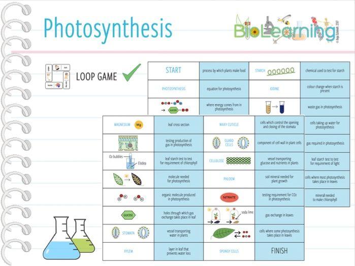 Photosynthesis - Loop Game (KS3/4)
