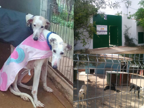 Rescue Shelters