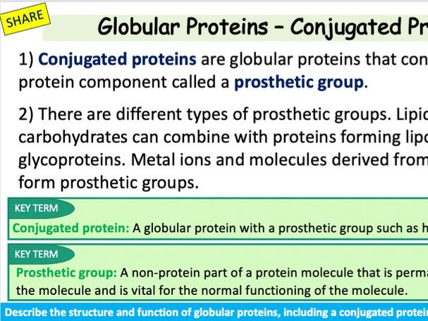 Comparing Protein Structure and Function