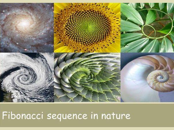 Biomimicry and Fibonacci design lesson PPT