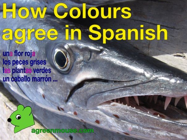 How Colours agree in Spanish - Video + Worksheet