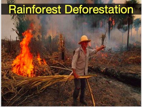 Rainforest Deforestation - Causes and Diamond 9