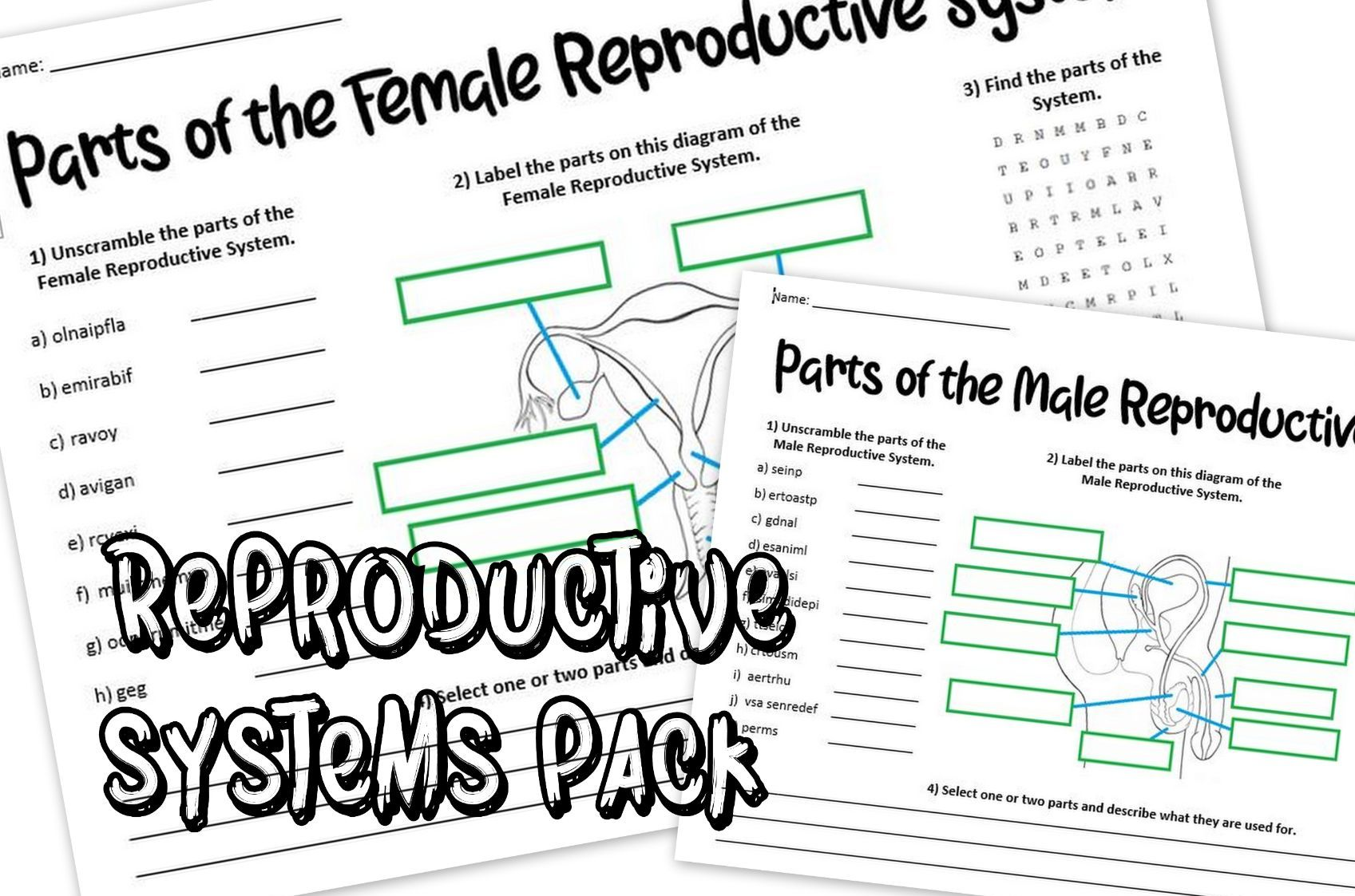 Reproductive Systems Pack