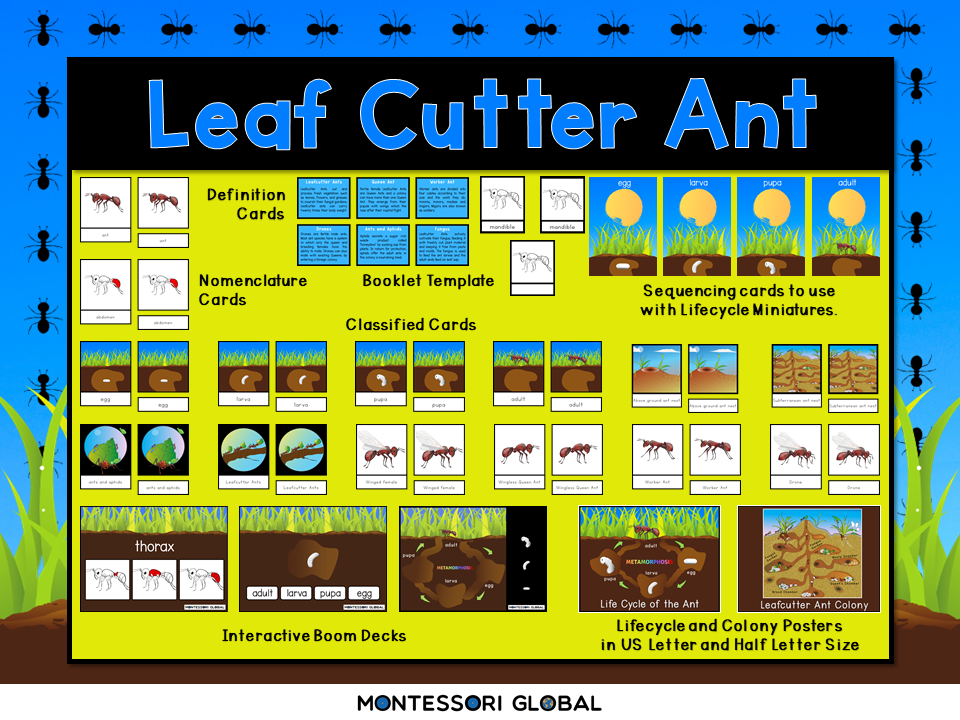 Parts of the Ant and Lifecycle | Montessori Cards and Boom Cards™