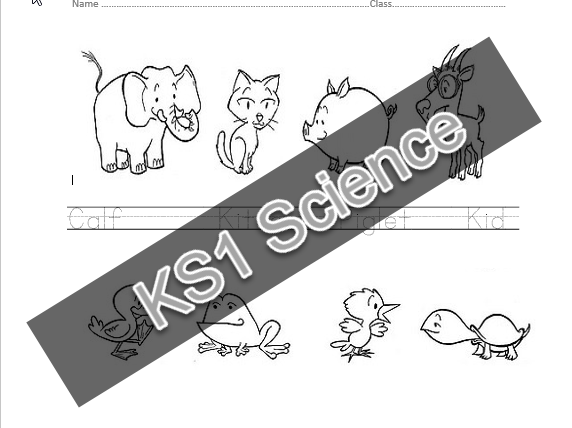 KS1 Science Lesson Starter Baby Animals