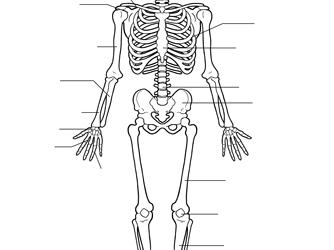 Lesson 9 - Bones