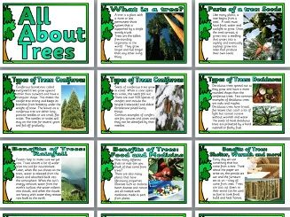 All About Trees Display Posters