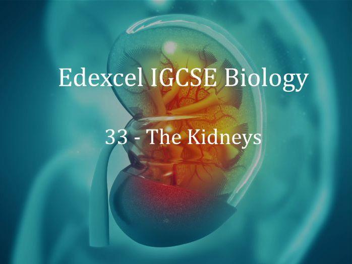 Edexcel IGCSE Biology Lecture 33 - The Kidneys
