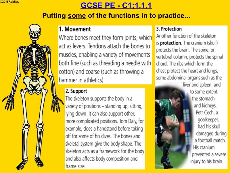 GCSE PE (Edexcel) Bundle - 16 Lessons - Anatomy & Physiology
