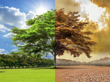 Environment - Stewardship (Christianity) & Khalifa (Islam)