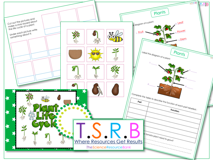 Plant Labels and  Life Cycle - Worksheet and Cut & Stick Activity with Poster