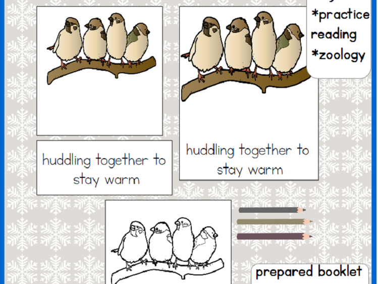 Birds In Winter - Montessori 3 - Part Cards PLUS Booklet