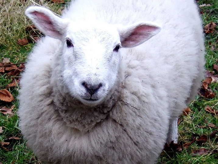 Lamb to the Slaughter - Reading and Writing Lessons