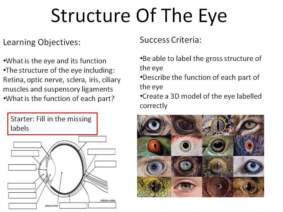 New Biology GCSE 9-1 Structure Of The Eye by JeffsStar_Science ...
