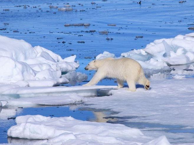 Ecosystems- Polar
