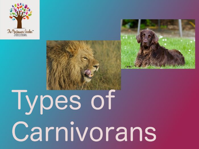 Montessori Classification: Types of Carnivorans