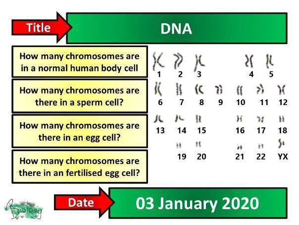 DNA - AQA Activate